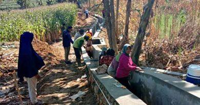 Padat Karya desa bicek todanan blora