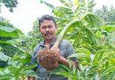 Koimin Raja Porang Jawa Timur
